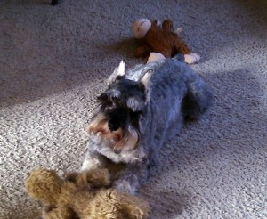 Change is hard. Here is a perplexed looking schnauzer to make it seem a bit easier.